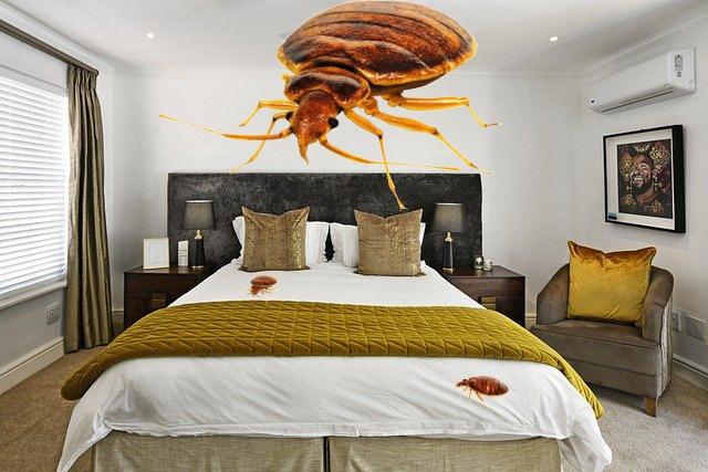 hotelkamer-bedwantsen-tips tegen bedwantsen