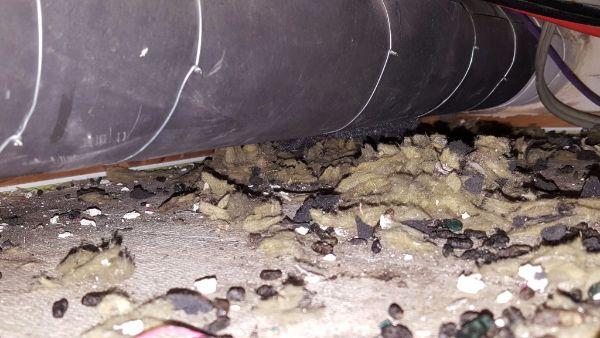 rattenpoep-uitwerpselen-van-ratten