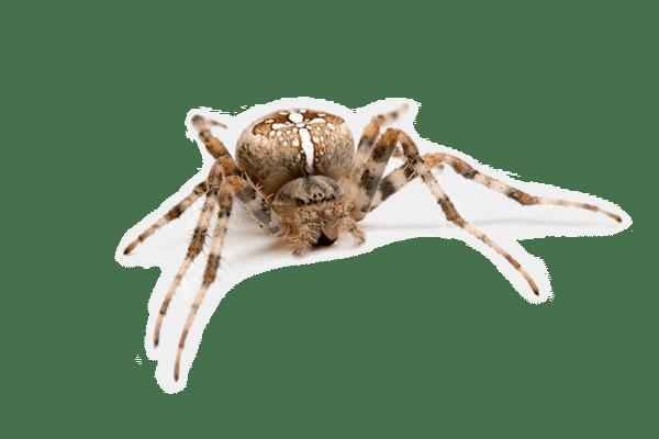 Spinnen-verdelgen-mag-niet