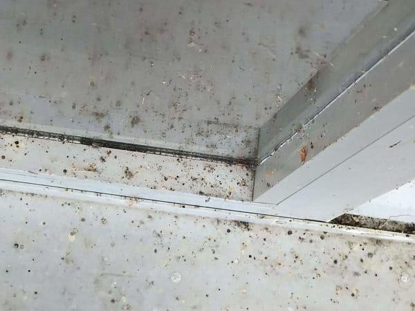 uitwerpselen van spinnen