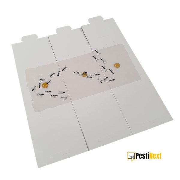 PestiNext-mierenval