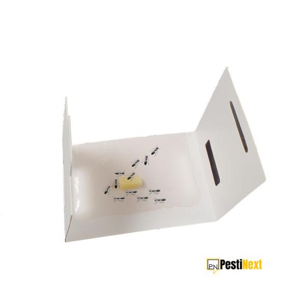 mierenval-PestiNext-lijmval-insecten